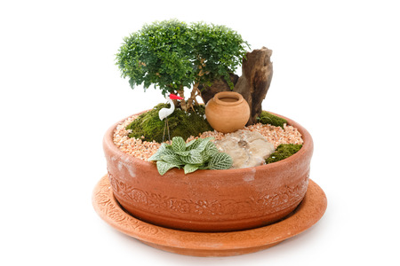 decorative balconies: Miniature Garden in a Pot