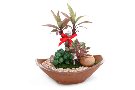 decorative balconies: Miniature garden in a pot isolate on white