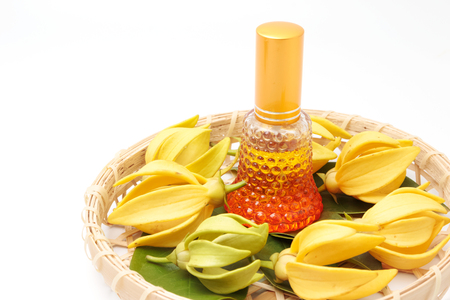siamensis: Ylang-Ylang essential oil with flowers isolated on white background.