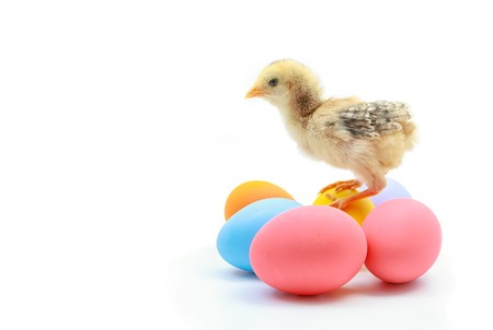 Easter colorful eggs and cute little chicken isolated on white background