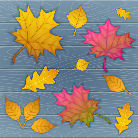 Illustration of autumn leaves on wooden blue . top view