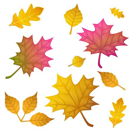 Autumn leaves set, isolated on white . flat style, illustration. 向量圖像