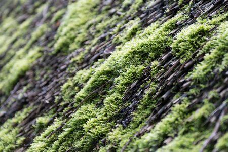decoy: Moss on a tree trunk