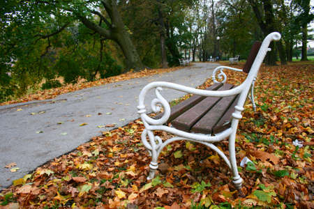 bench in the park with leafs