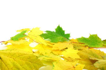 foglie isolato su bianco