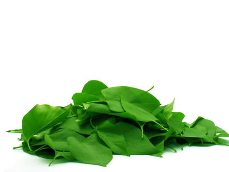 pile of green leaves on white background