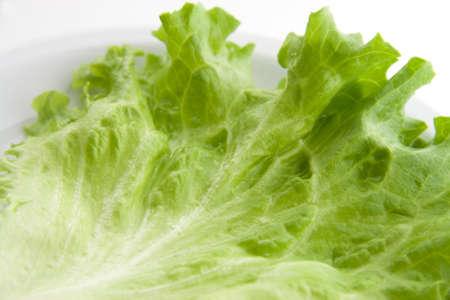 Serie di insalata lattuga verde Archivio Fotografico