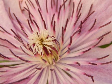 flower pink macro Stock Photo - 15984542