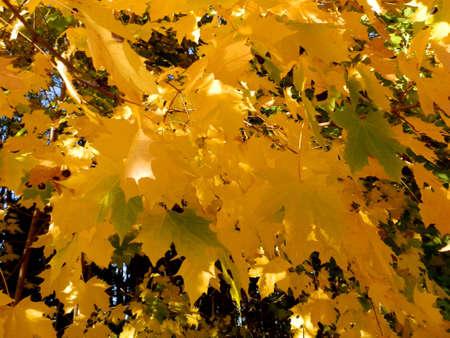 autumn tree_1