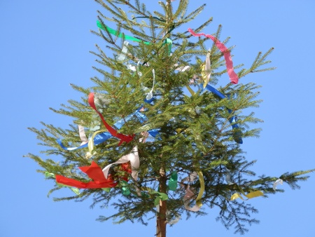 decorates trees at the may celebrations