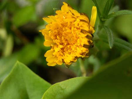 dandelion on green Stock Photo - 17177512