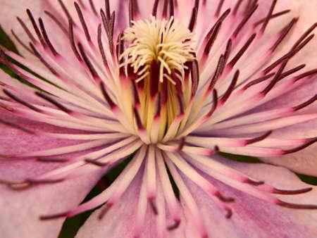 Pink flower Stock Photo - 17177553