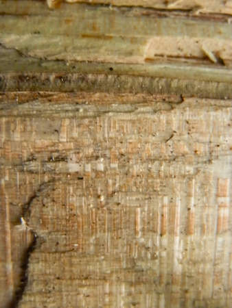 section of wood Stock Photo - 17177503