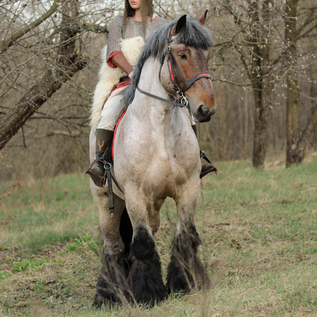 belgian horse: Cropped image of brave woman in armor on a purebred belgian horse