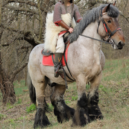 Cropped image of brave woman in armor on a purebred belgian horse