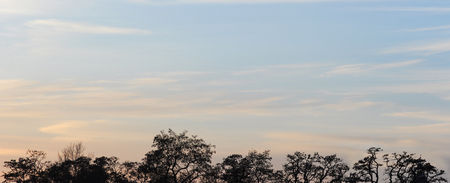 Background of trees at sunset time, sky light at dawn and twilight