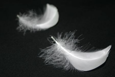 white feather: Close up of two Feathers. Focus on the front feather.