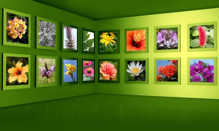 flower photos: Flower photos display on the wall combine with 3d frame and wall