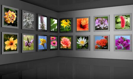 art gallery: Flower photos display on the wall combine with 3d frame and wall