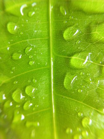Green leaf water drops background  Stock Photo - 21246129