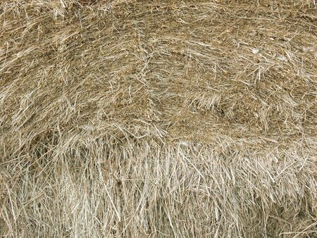 homogeneous: Haystack close up. The photo can become a successful background of the future composition. Stock Photo