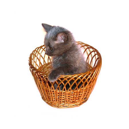 capacious: Basket with a small ridiculous kitten on a white background