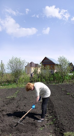 laborious: The woman of average years is engaged in ground works on own ground area