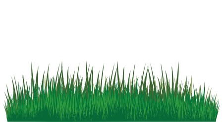 porch: Green grass of different shades on a white background. It is very convenient to use this picture for a background or in your collage. Stock Photo