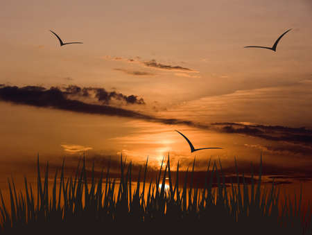 imposed: Collage from the photo representing a sunset on summer day and a black silhouette imposed on of a grass, designating horizon and flying birds Stock Photo