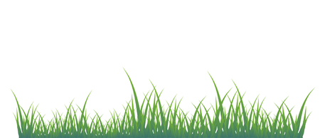 Green grass of different shades on a white background. It is very convenient to use this picture for a background or in your collage. Illustration
