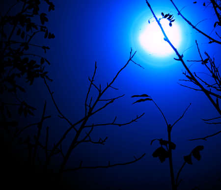 night landscape: black branches of trees on a background of the white-yellow full moon and the dark blue sky. Stock Photo - 1658286