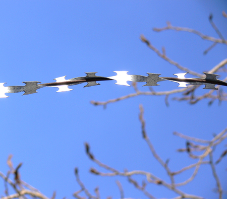 barbed hook wires: Barbed wire on a background of the blue sky and branches of a tree