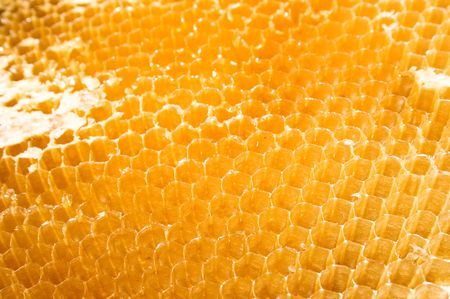 Cells for beer honey with a beehive