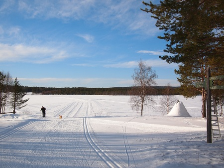wintersport: Cross-country skiing in a snow white Lapland landscape