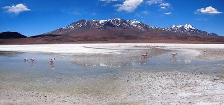 potassium: Flamingos in a laguna in Bolivia at the altiplano near Uyuni. The white substance is potassium salt. Stock Photo