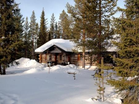 시골집: 로맨틱 눈 라플란드, 핀란드의 휴양지에서 나무 사이 로그 오두막이 덮여있다.