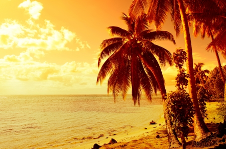 Tropical sunset at a beach with a coconut palm tree on Moorea, an island near Tahiti in French Polynesia. photo