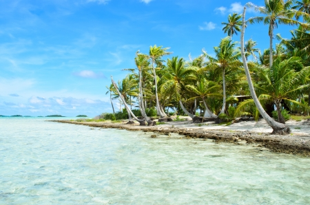 polynesia: Coconut palms on the beach of a desert island near Tahiti in French Polynesia in the pacific ocean.