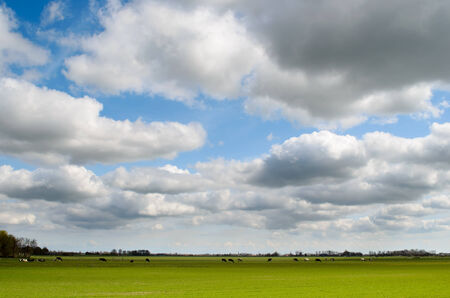 holland landscape: Rural landscape with a meadow with cows and dutch clouds in Holland