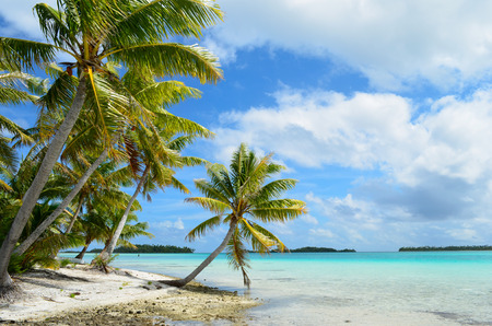 Hanging palm tree on a tropical white sand beach with a blue sea in the lagoon of the Tahiti archipelago French Polynesia  photo