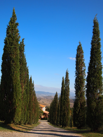entranceway: Italian access route lined by cypress trees with Tuscany background