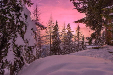 wintersport: Snow trees during sunset in a ski resort area in Lapland