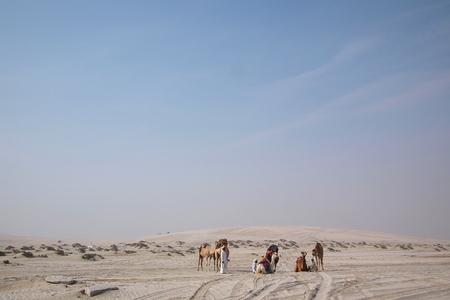 dromedaries: Mesaieed, Qatar - January 10, 2014: A group bedouin with dromedaries in the sand of the Arabian desert in Masaieed in the Arabian Gulf state Qatar on January 10, 2014.