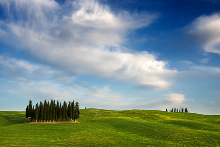 orcia: A group of cypress trees between green hills and yellow flowers and under beautiful white clouds near Torrenieri in the Valdorcia Orcia valley in Tuscany, Italy.