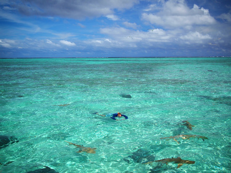 stingrays: A tourist in sun protective swimwear photographing during snorkeling with sharks and stingrays in the shallow, clear water of the lagoon of Bora Bora, a tropical island in the Tahiti archipelago French Polynesia in the Pacific Ocean. Stock Photo