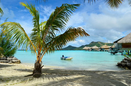 french polynesia: A beach and a palm tree in a luxury overwater thatched roof bungalow vacation resort with a view on the clear blue lagoon and the tropical island of Bora Bora, near Tahiti, in French Polynesia.