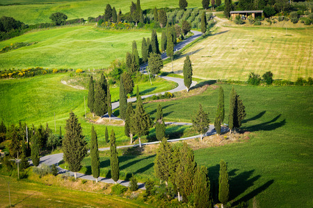 orcia: The winding road, lined with cypress trees through the green fields of the Valdorcia zigzagging towards Monticchiello in Tuscany. It is one of the most famous roads of Italy.