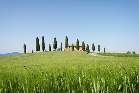 orcia: A farmhouse in Tuscany on a hill with cypress trees and a green field with young wheat crops in front of it before harvest time in Pienza Valdorcia Orcia Valley, Italy.