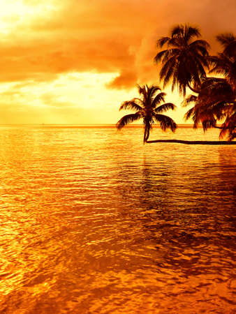 naturally: Tropical sunset at a beach with a coconut palm tree on Moorea, an island near Tahiti in French Polynesia.