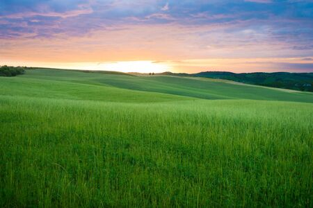 val dorcia: Colorful sunset over the fresh green wheat fields on the rolling hills of the Val dOrcia valley in Tuscany, Italy.